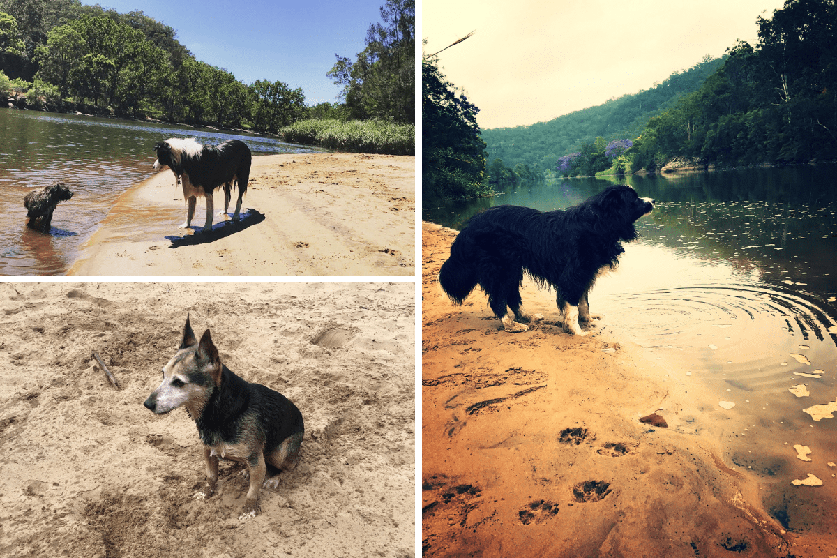 River_access_dogs-1200x800.png#asset:2026