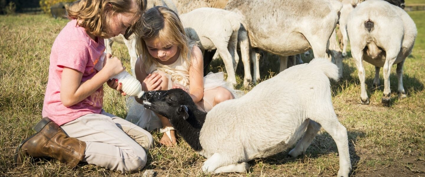 Blog Children Feeding Sheep